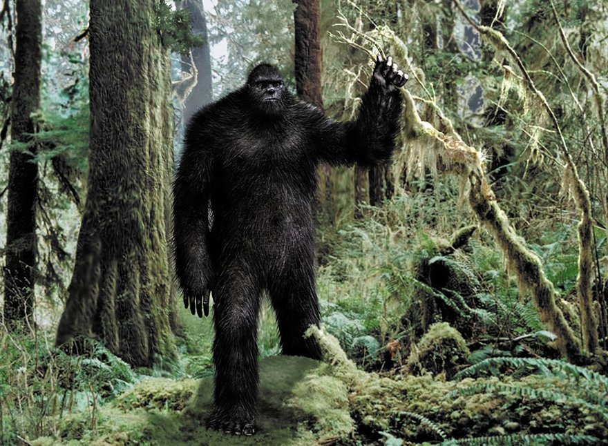 an argument in favor of existence of big foot yeti and sasquatch Ten arguments against bigfoot argument against the existence of a large unknown animal or maybe hidden/buried by other sasquatch.