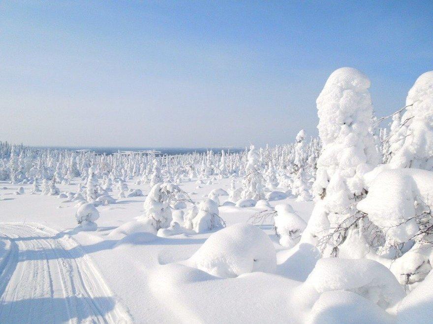 Национальный парк «Паанаярви» — место, которое обязательно нужно посетить  зимой | Blog Fiesta
