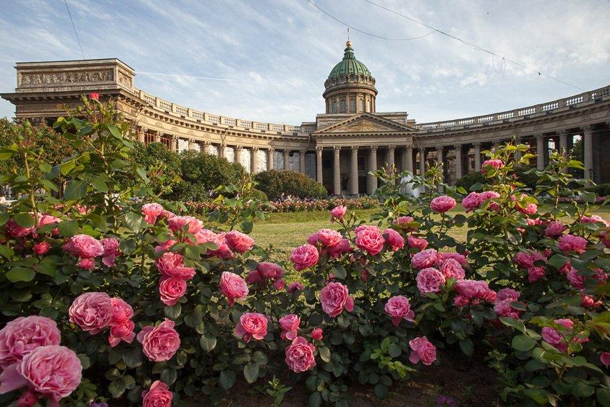 Летние цветники в Петербурге оформят в стиле Года науки и технологий