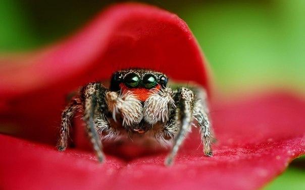 пауки спб фото