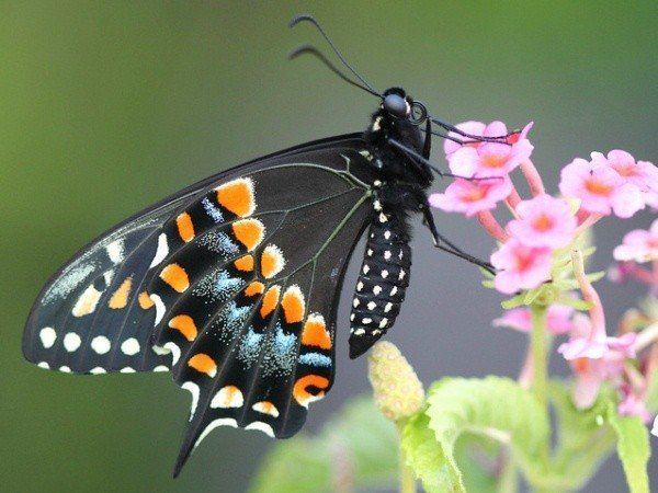 Сад живых бабочек