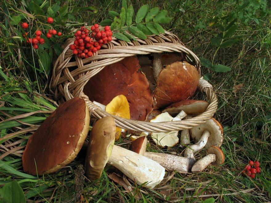 Картинки собирать грибы и ягоды