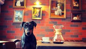Кофейня Pinscher Coffee
