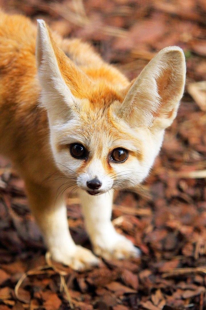 Самые красивые фото животных с названиями