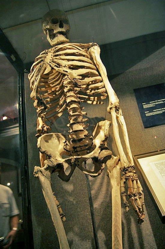 Мистика в музеях Санкт-Петербурга. Скелет француза-гиганта