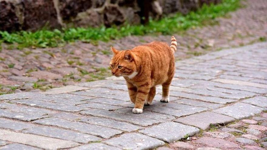 Удивительные животные Выборгского замка