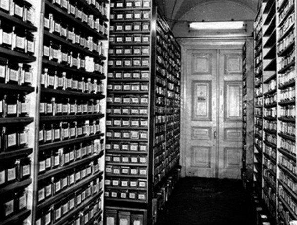 Сотрудники ВИР полностью сохранили уникальную коллекцию семян